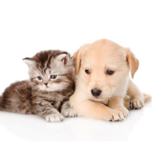 Vacuum Cleaners for Pet Owners